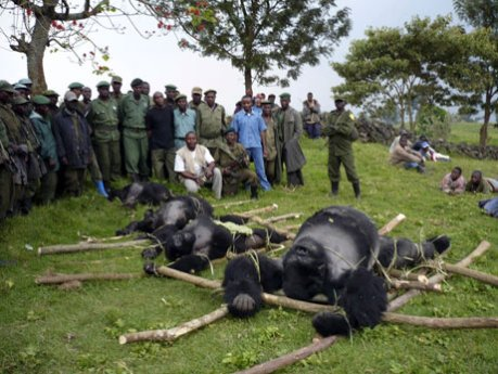 080325-gorillas-arrest_big.jpg