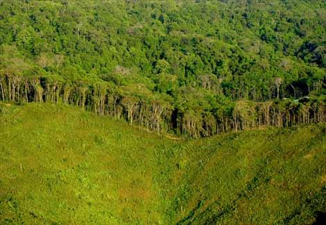 deforestationpanama-ap02031203981-ga.jpg